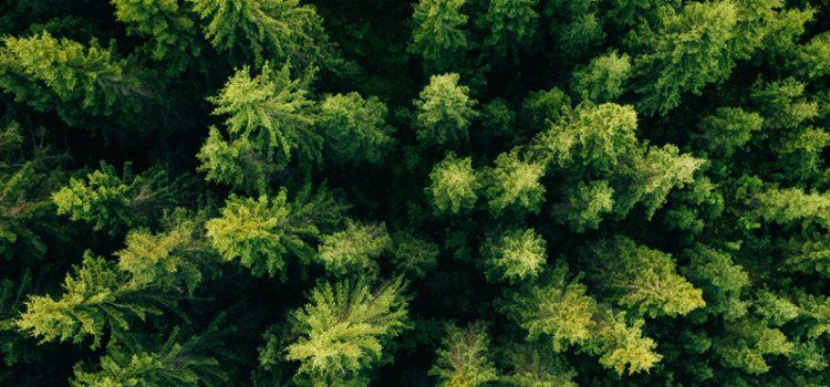 Закон про заборону вирубки лісів на гірських схилах Карпат